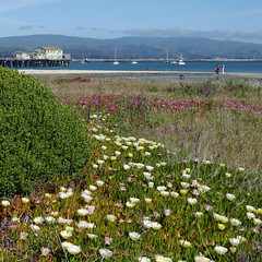 5/7/18 16:20 (joncosner) Tags: 2018 california flora formatsquare halfmoonbay sfbayarea southbay stars2