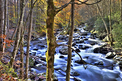 Middle Prong Little River, Great Smoky Mountains National Park, Tennessee (klauslang99) Tags: america appalachianmountains autumn beautynature bush color colour creek daytime deciduoustrees exterior foliage forest greatsmokymountainsnationalpark idyllic middlepronglittleriver mountains nature nobody northamerica outdoor outdoors outside picturesque plant plants rapids rhododendron river rocks scenic scenics season shrub southeastusa splashing tennessee trail trails tranquilscene unitedstates usa vegetation klauslang ngc