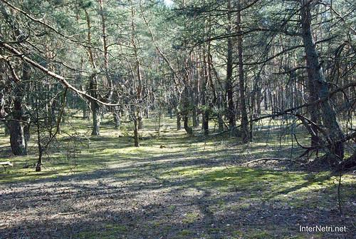 Волинський ліс InterNetri Ukraine 0171558701