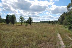 Волинський ліс Лісова галявина InterNetri Ukraine 1722572358