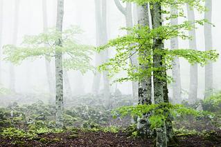 Reborn Forest