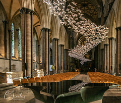 Art for Peace - Salisbury Cathedral (C Sinclair) Tags: salisbury salisburycathedral origami peacedoves