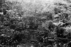 Dupla exposição (Beatriz_Roveri) Tags: canonrebel2000 kodak tx trix 400iso bw black white pb double exposure sobreposição overlap sp yashica 108 mp tree