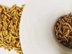 Gusanos. Chef Koketo (JorgeHernandezAlonso) Tags: gusanos insectos comergusanos comerinsectos comidagusanos koketo chefkoketo jorgehernándezalonso jorgehdezalonso