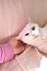 Charlie (rootcrop54) Tags: charlie white allwhite cat goofy hotpink neko macska kedi 猫 kočka kissa γάτα köttur kucing gatto 고양이 kaķis katė katt katze katzen kot кошка mačka gatos maček kitteh chat ネコ