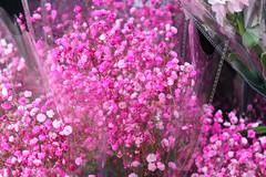 Flower Market (Terry Hassan) Tags: hongkong 香港 flower market plant plants