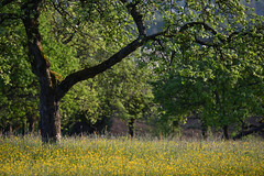 Bain de nature (Excalibur67) Tags: nikon d750 sigma contemporary globalvision 100400f563dgoshsmc paysage landscape arbres trees nature campagne