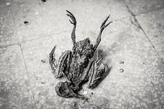 Atterraggio (GalloInTheBox) Tags: blackandwhite death morto animal bird stilllife bianco nero uccelli sony alpha