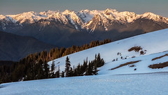 The Ridge At Sunrise (chasingthelight10) Tags: events photography travel landscapes forests mountains places washingtonstate olympicnationalpark hurricaneridge olympicmountains mtolympus sunrise
