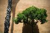 spain2014u (Roddy McIntosh) Tags: palma majorca spaintrees palmtree d3