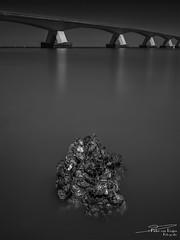 Zeelandbrug. (PvRFotografie) Tags: nederland holland zeeland zeelandbrug water river rivier nature natuur bridge brug zwartwit blackandwhite blackwhite monochrome hasselblad hasselbladx1d 45mm hasselblad4116 hasselbladxcd45mf35