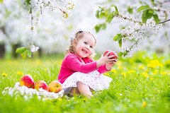 Happy toddler girl eating apple in blooming garden (colourfulcreation05) Tags: baby apple child garden healthy girl nature beautiful family green happy happiness park kid summer food fruit little cute fun young tree toddler childhood background people spring caucasian outdoor white sweet portrait lifestyle adorable grass smile health dandelion flower blooming blossom playing laughing funny picnic eating breakfast lunch snack red angel princess birthday flowers fairy wings easter wingsadorable blue cheerful cherry costume crown curly dress fantasy fashion gardening magic magical pink russianfederation