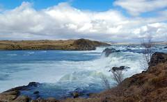 Búði (skolavellir12) Tags: river þjórsá iceland búði salmo salmon trout trutta fish lax laks waterfall glacial waterpower station fishway magnús jóhannsson