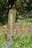 Number Nine (John of Witney) Tags: nine 9 flowers lydneyparkestate lydney gloucestershire forestofdean