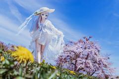 breeze of spring (AZURE_TB) Tags: spring cherryblossom sakura dollfiedream sony dscrx1r rx1r