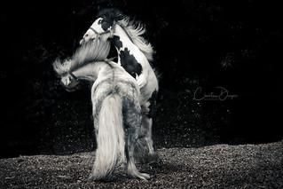 Ponies at Play *1