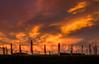 Front Row Seats (ajecaldwell11) Tags: xe3 sunset ankh celestialcompass orange light hawkesbay newzealand napier pou waitangi sky dusk ateaarangi caldwell fujifilm clouds