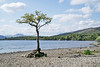Loch Lomond (John's Wildworld) Tags: lochs lochlomond thetrossachs scotland