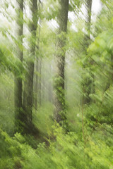 Spring Forest abstract 2 (Heather Cormons) Tags: spring forest trees appalachian mountains virginia abstract mist