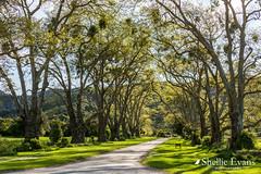 Totaranui DOC Camp, Abel Tasman National Park, Golden Bay (flyingkiwigirl) Tags: abeltasman bird camp deer doc fernbird goldenbay kereru nationalpark pukeko totaranui weka whiteheron