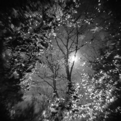 From the Ground Up #1 (LowerDarnley) Tags: holga spring water trees sun reflection mud middlesexfellsreservation morningwalk woods