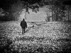 One Man & His Dog (mr_m_tom) Tags: reigate walking crop tree field dog man