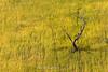 _Y2U9491.0916.Xím Vàng.Bắc Yên.Sơn La (hoanglongphoto) Tags: asia asian vietnam northvietnam northwestvietnam landscape scenery vietnamlandscape vietnamscenery vietnamscene hillside harvest tree sunlight sunny canon canoneos1dx tâybắc sơnla bắcyên xímvàng phongcảnh phongcảnhtâybắc sườnđồi cây câykhô nắng lúachín mùagặt lúanương côđơn côđộc one 1 canonef100400mmf4556lisusm minimalisme