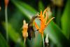 _DSC3275.jpg (Light Machinery) Tags: sunbird