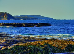 Depot Beach VII (elphweb) Tags: hdr highdynamicrange nsw australia seaweed waves surf