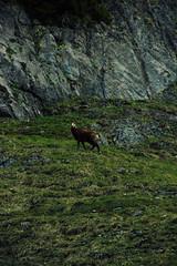 IMG_3178-5 (niggow) Tags: hiking wandern wanderung germany bavaria bayern deutschland österreich alps sonnwendjoch ht sonndwendjoch hinteres photoshop photography photographer photo photoshoot photographie wanderlust take more adventures ausflug mountains berge alpen bayrische