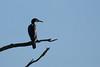 An eye on a fly (Mibby23) Tags: cormorant phalacrocorax carbo bird wildlife nature aston clinton grand union canal fly canon 70d sigma 150600 contemporary