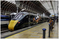 Paddington Station: Those new Great Western Railroad passenger carriages are capacious enough to host a full-scale regulation polo game. (Fotofricassee) Tags: great western railroad carriage horse polo rider paddington station