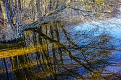 14-03-12 mec refl ufer dsc00083-1 (u ki11 ulrich kracke) Tags: ast chaos dümmersee mecklenburgvorpommern schatten spiegel zarrentin cof023 reflexion panorama