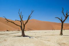 IMG_9932 (tregnier) Tags: namibia roadtrip africa travel desert animals sossusvlei leopard cheetah lion solitaire trip