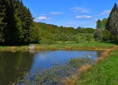 (:Linda:) Tags: germany thuringia village bürden pond reflection tree conifer cloud