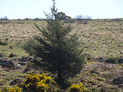 DSC07428 (guyfogwill) Tags: belever dartmoor dartmoornationalpark devon guyfogwill unitedkingdom dartmoorforest gbr