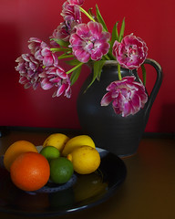 full colour still life on red! (Wendy:) Tags: tulips pink stilllife colours odc red fruit orange lemons limes tetradic doublecomplementary