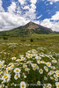 Crested Butte Wildflowers (RondaKimbrow) Tags: crestedbutte wildflowers mountains summer season daisies green lush colorado field meadow clouds sky beautiful nature outdoors hiking yellow white blue gunnison view scenic