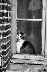 PENTAX ME SUPER Rikenon 1.7 50 FOMA 200 XTOL (Leinik) Tags: pentax me super rikenon 17 50 foma 200 xtol chat cat gato bw black white blanc noir blanco negro bianco nero