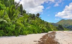 playa (vic_206) Tags: beach seychelles