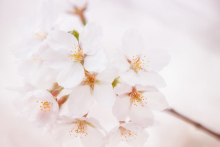 Freshest Bloom