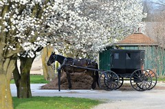 Amish Scene in a Spring Drizzle (forestforthetress) Tags: amish horse buggy horseandbuggy outdoor color omot nikon google tree