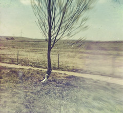 i don't think its real (jssteak) Tags: canon t1i tree rural duck ceramicyardornamant plains colorado carlos fence distressed aged lightleak