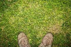 134/365 - The ground at my feet