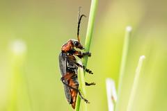 Nature au printemps - (Noir et Blanc 19) Tags: nature insectes plantes macro sony a77