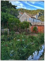 IMG_8100_2 (Rob Rocke) Tags: hvar croatia secretgarden dalmatia tomatoes vegetables thegoldenhour themagichour unstuckintime snapseed vbt oldstonebuilding
