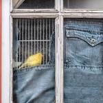 fenêtre sur jeans thumbnail