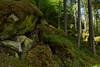 Deep in the Forest (Ernst_P.) Tags: aut oetz österreich piburgersee tirol sony zeiss distagon 24mm f20 wald forest bosque baum fichte tree arbol moos flechte moss ötz ötztal breathtakinglandscapes