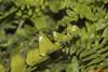 Helecho Serrucho (Florián Paucke) Tags: argentina biotopo biología bosque botánica humedal ecología ecosistema estero helecho humedad humus medioambiente macrofotografía naturaleza naturalista cienciasnaturales ciencia canon campo c