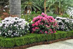 Floral Display (chooyutshing) Tags: flower floraldisplay flowerdome gardensbythebay baysouth marinabay singapore